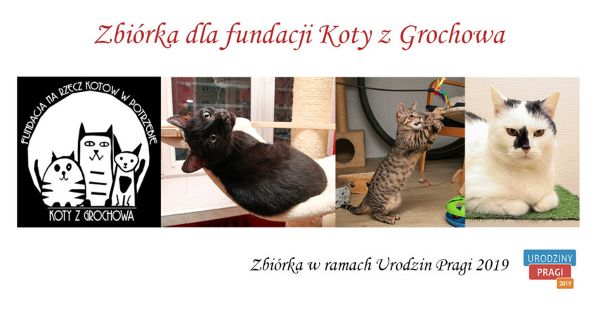 """Zbiórka rzeczy dla fundacji """"Koty zGrochowa"""""""